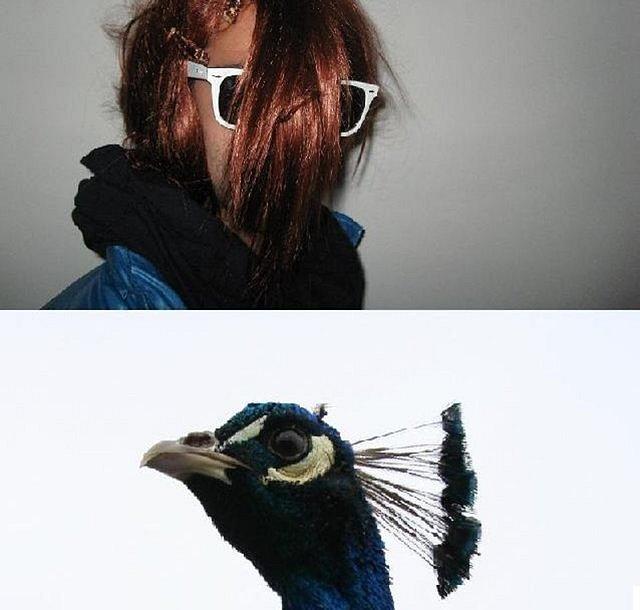 BlackBambi - Treasure the Peacock